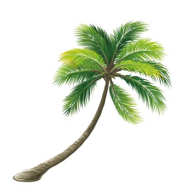 Représentation d'un palmier